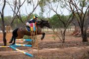 horse-DC-0016-20210411-DSC06813