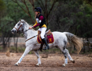 horse-CW-0311-_CLW6905