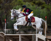 horse-CW-0313-_CLW6909