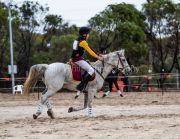 horse-CW-0319-_CLW6918