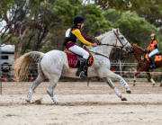 horse-CW-0321-_CLW6924