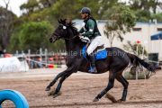 horse-CW-0329-_CLW6939