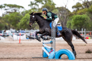 horse-CW-0331-_CLW6942