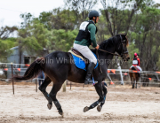 horse-CW-0342-_CLW6973