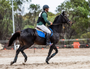 horse-CW-0343-_CLW6975