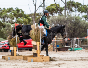 horse-CW-0351-_CLW6987