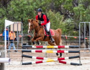 horse-CW-0352-_CLW6992