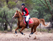 horse-CW-0358-_CLW7013