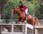 horse-CW-0360-_CLW7018