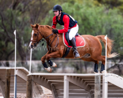 horse-CW-0361-_CLW7019