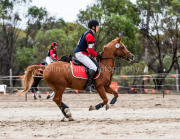 horse-CW-0366-_CLW7035