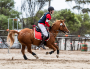 horse-CW-0372-_CLW7059