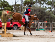 horse-CW-0375-_CLW7065