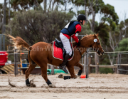 horse-CW-0376-_CLW7066