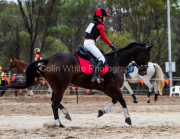 horse-CW-0409-_CLW7160