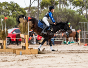 horse-CW-0431-_CLW7215