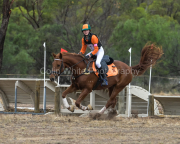 horse-CW-0436-_CLW8870