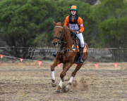 horse-CW-0438-_CLW8872