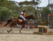 horse-CW-0443-_CLW8884