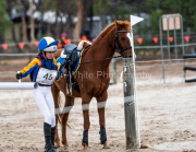 horse-CW-0449-_CLW7220