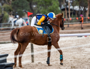 horse-CW-0451-_CLW7223