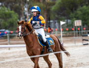 horse-CW-0453-_CLW7225