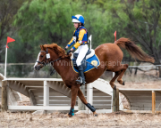 horse-CW-0456-_CLW7240