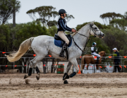 horse-CW-0481-_CLW7299