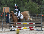 horse-CW-0513-_CLW8962