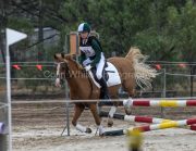horse-CW-0514-_CLW8963