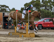 horse-CW-0527-_CLW8992