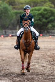 horse-CW-0551-_CLW7328