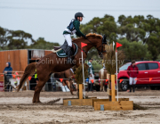 horse-CW-0553-_CLW7337