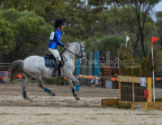 horse-CW-0586-_CLW9035