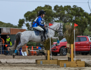 horse-CW-0587-_CLW9042