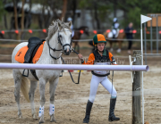 horse-CW-0600-_CLW9075
