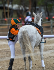 horse-CW-0601-_CLW9077
