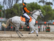 horse-CW-0610-_CLW9114