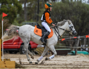horse-CW-0614-_CLW9122