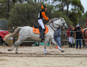 horse-CW-0615-_CLW9123