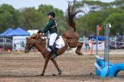 horse-CW-0618-_CLW9126