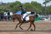 horse-CW-0619-_CLW9127