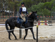 horse-CW-0635-_CLW9173