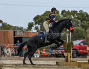 horse-CW-0646-_CLW9213