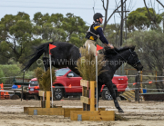 horse-CW-0648-_CLW9215