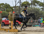 horse-CW-0649-_CLW9216