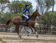 horse-CW-0669-_CLW9260