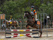 horse-CW-0670-_CLW9268