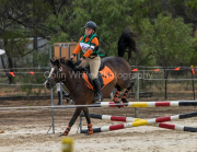horse-CW-0672-_CLW9270