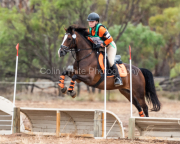 horse-CW-0676-_CLW7421